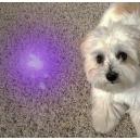 Bioerityksen havaitseminen UV-mustan valon taskulampun avulla
